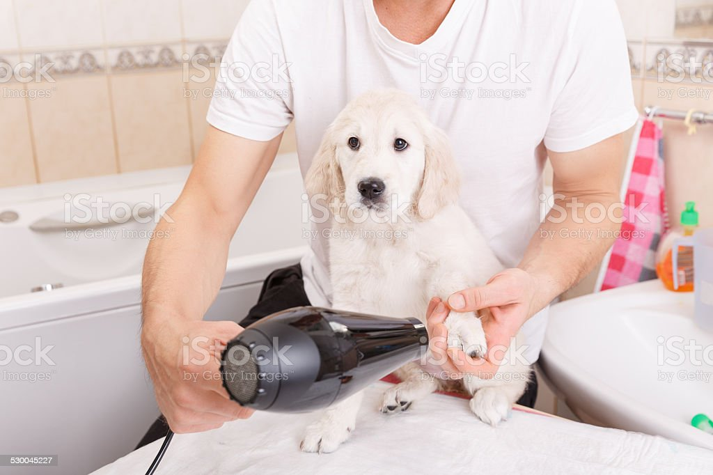 man grooming of his dog at home stock photo
