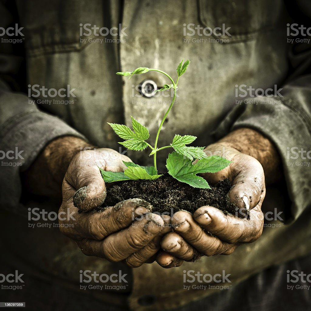 Man hand holding a green young plant stock photo
