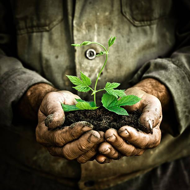 Mann hand hält eine grüne Junge Pflanze – Foto