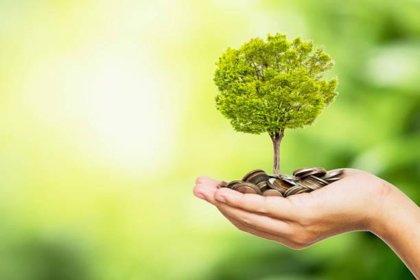 人手拿著硬幣和樹看起來像種植在綠化背景和陽光種植。增長儲蓄和投資理念。 - 慈善會 個照片及圖片檔