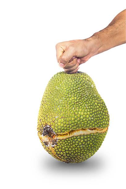 Man hand holding crack peel jackfruit – Foto