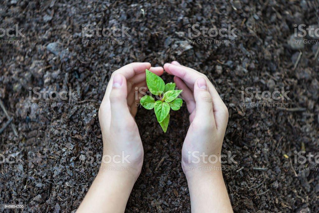 Hand Des Menschen Ist Die Pflanze In Den Boden Pflanzen