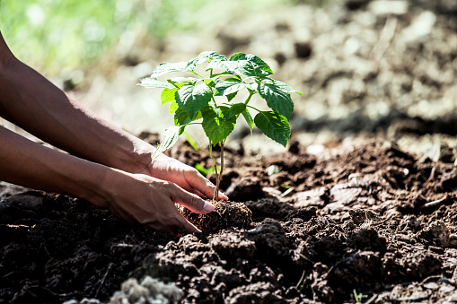 1139475964 istock photo Man hand planting young tree on black soil 639299654