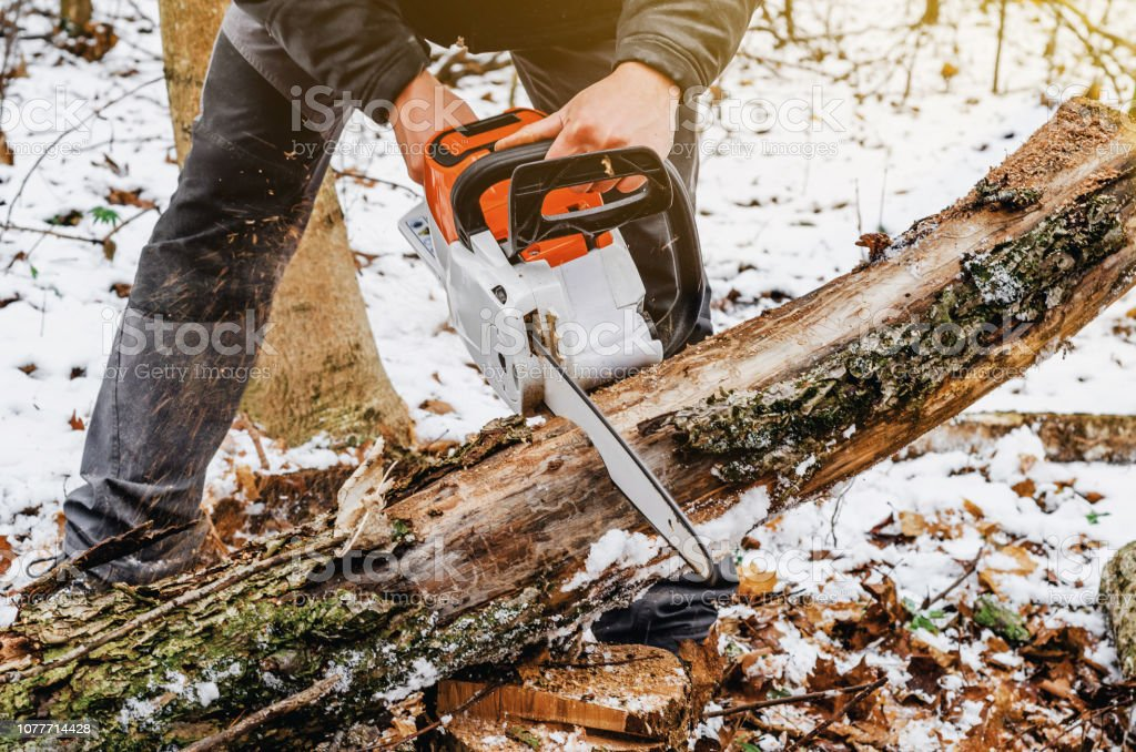 Man hands holding an electric chainsaw, saws a tree in the forest....