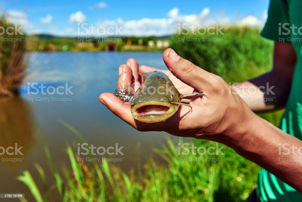 Mãos de homem segurando catfish - foto de acervo