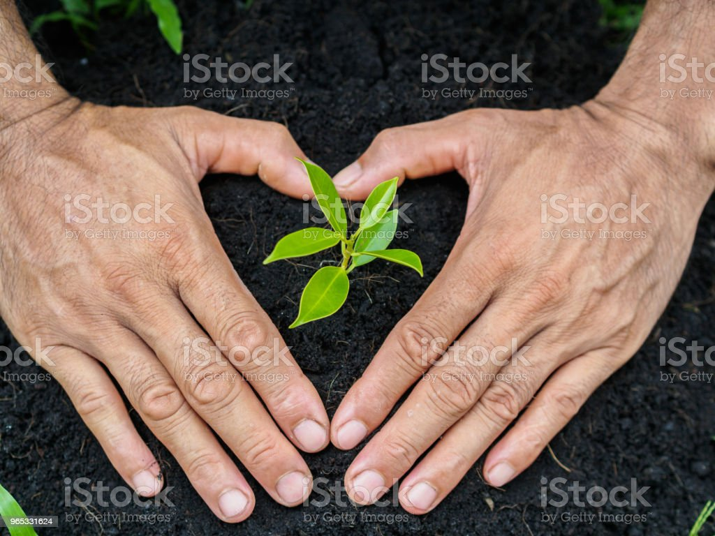 Man hands planting the tree into the soil. planting concept. zbiór zdjęć royalty-free