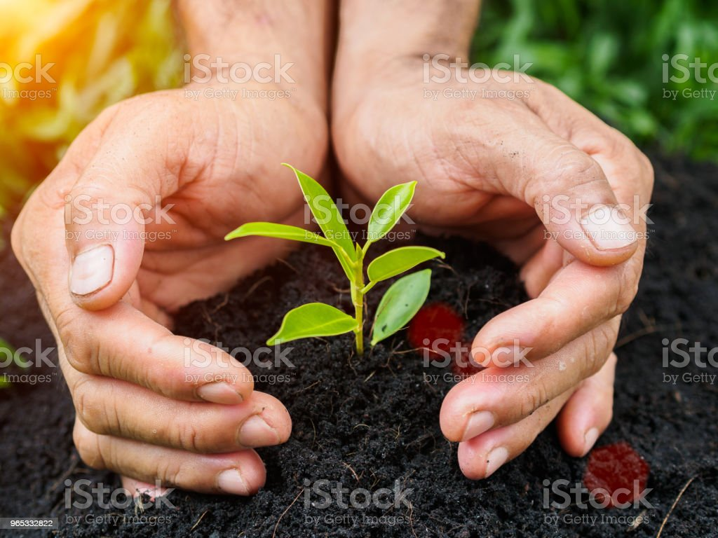 Man hands planting the tree into the soil. planting concept. zbiór zdjęć royalty-free