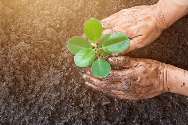 giovane uomo mani piantare albero mentre lavorando in giardino - piantare foto e immagini stock