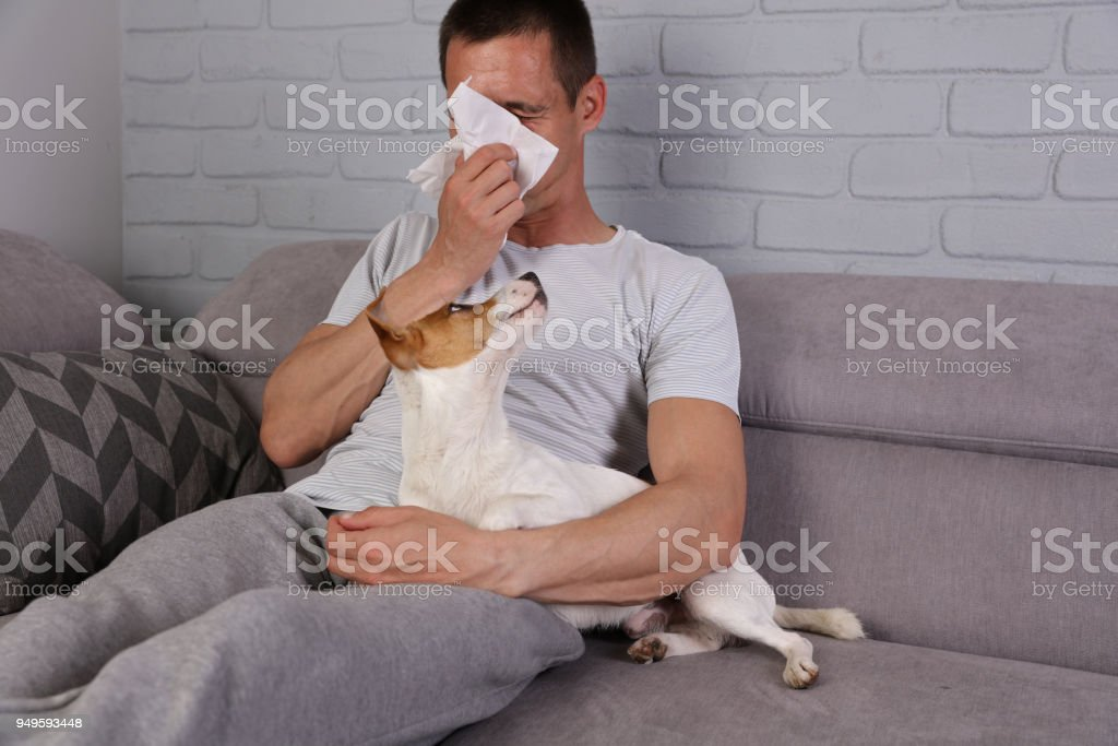 Man having pet allergy symptoms : runny nose, asthma stock photo