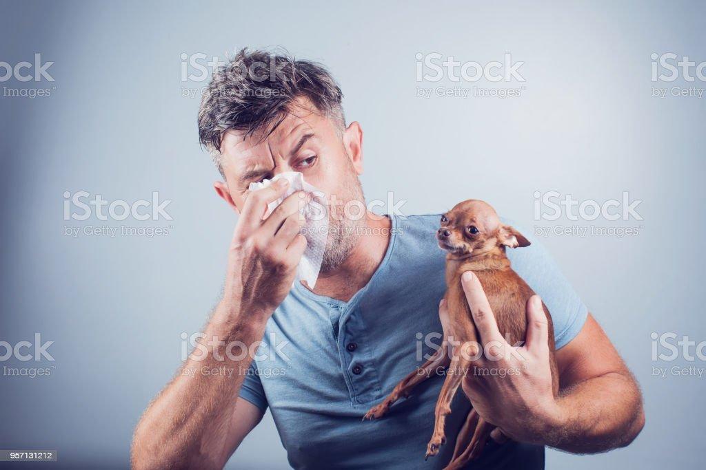 Man having pet allergy symptoms : runny nose, asthma stock photo