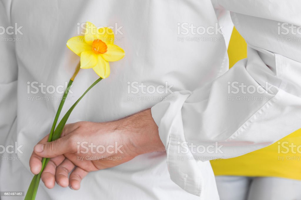 Man hiding flower behind his back and is going to give it to his beloved in spring day. Man's hand holding yellow narcissus. Стоковые фото Стоковая фотография