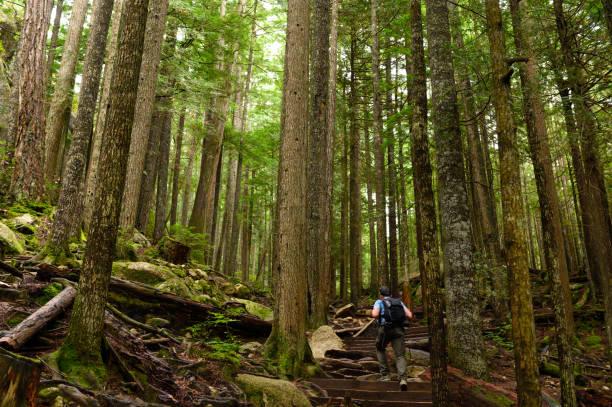 Mann wandert in einem üppigen grünen Wald – Foto