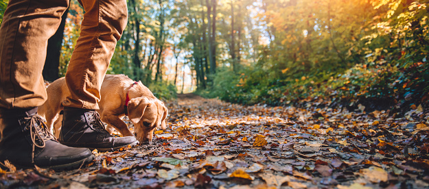 istock Man hiking in autumn forest with dog 621691690