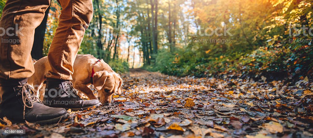 Man hiking in autumn forest with dog stock photo
