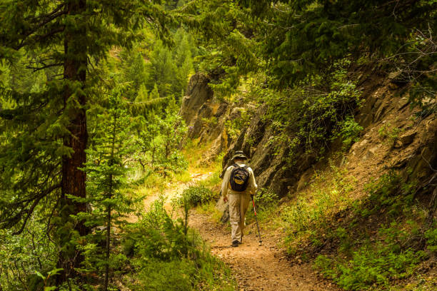 Man hiking in the woods of Colorado Elderly man with a backpack hiking in the woods in Colorado, USA, at sunset steamboat springs stock pictures, royalty-free photos & images
