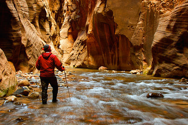 Man Hiking the narrows A man hiking into the narrows in Zion National Park, Utah USA. zion national park stock pictures, royalty-free photos & images