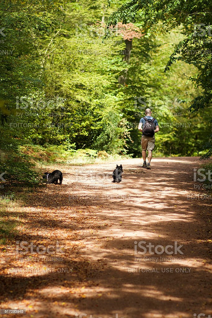 Man Hiking With Two Dogs in Epping Forest stock photo