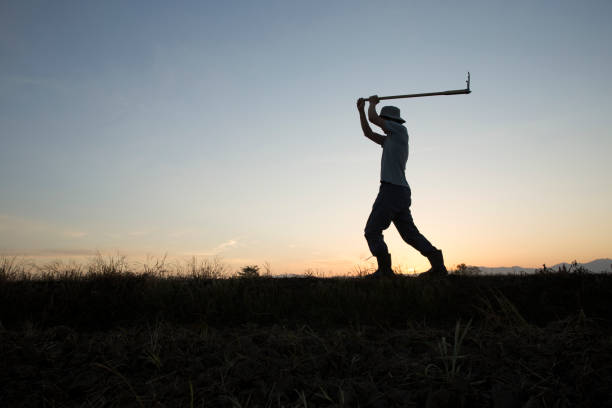 man hoeing farmer hoeing on the land farm worker stock pictures, royalty-free photos & images