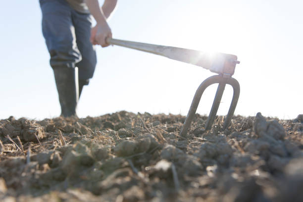 man hoeing farmer hoeing garden hoe stock pictures, royalty-free photos & images