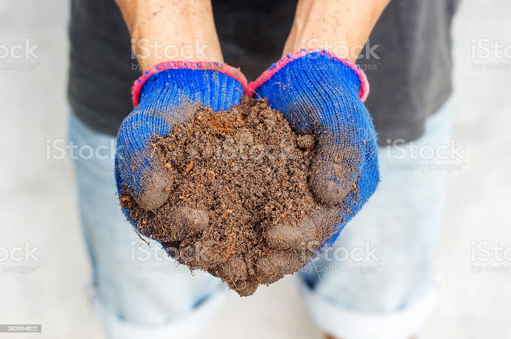 Man hold a soil in his hands. stock photo