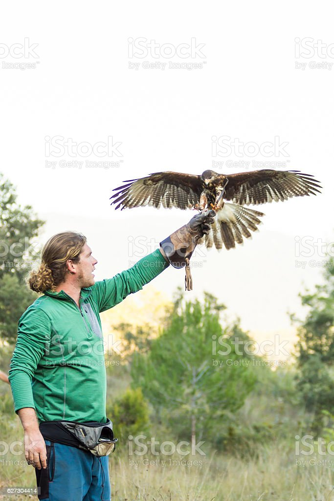 Man holding a falcon on his arm stock photo