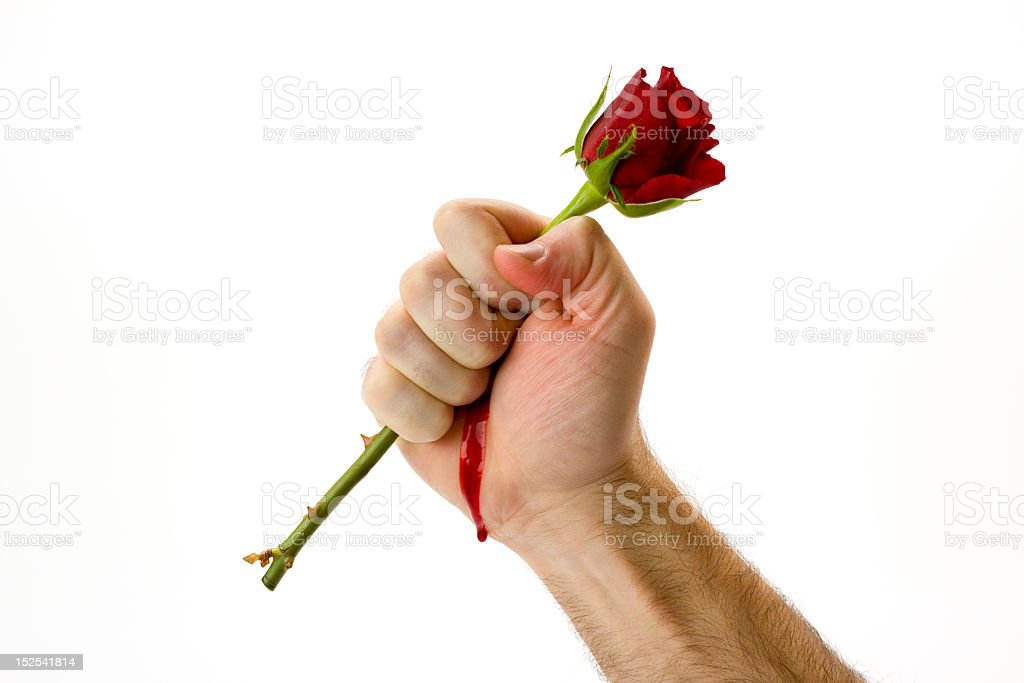 A man holding a red rose and bleeding from the pricks stock photo
