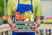 African American mans hands holding a basket on fresh summer vegetables. Focus on hands and basket, head is out of frame. He is wearing a green shirt and blue apron.