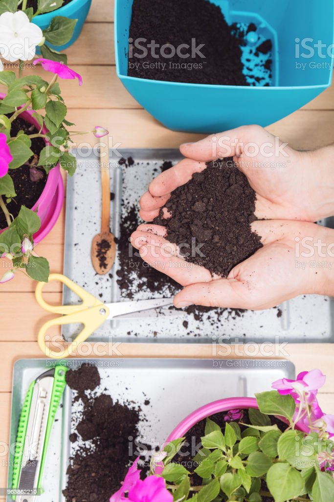 Man holding black soil in hands. Gardening concept. - Royalty-free Above Stock Photo