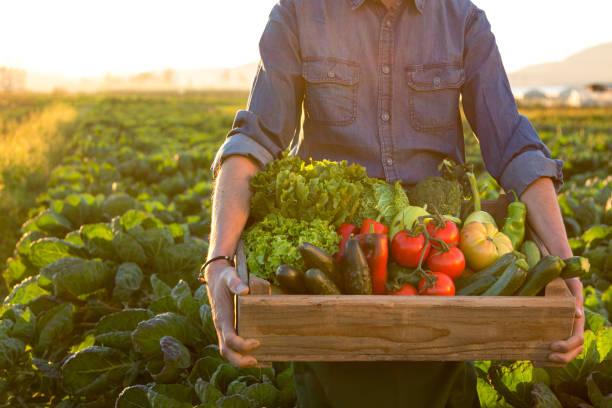 człowiek trzymający skrzynię ob świeżych warzyw - zbierać plony zdjęcia i obrazy z banku zdjęć