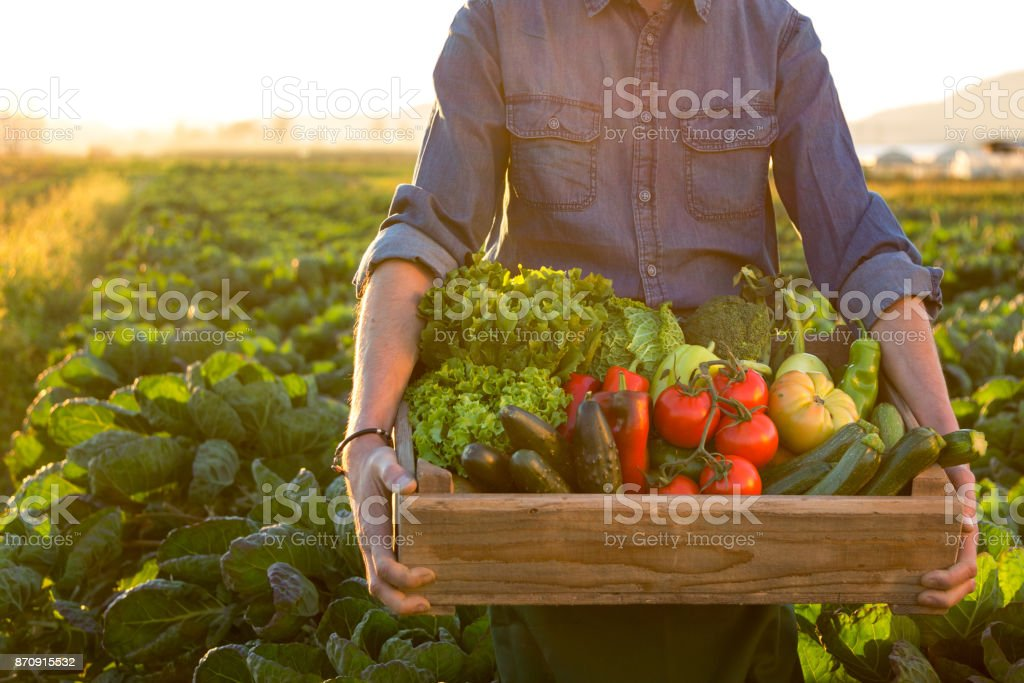 Man holding crate ob fresh vegetables stock photo
