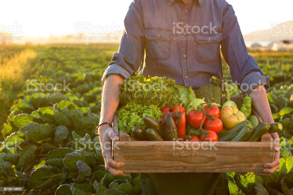 Mann hält Kiste Ob frisches Gemüse – Foto