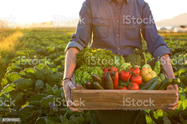 Farmer carrying crate with vegetables.