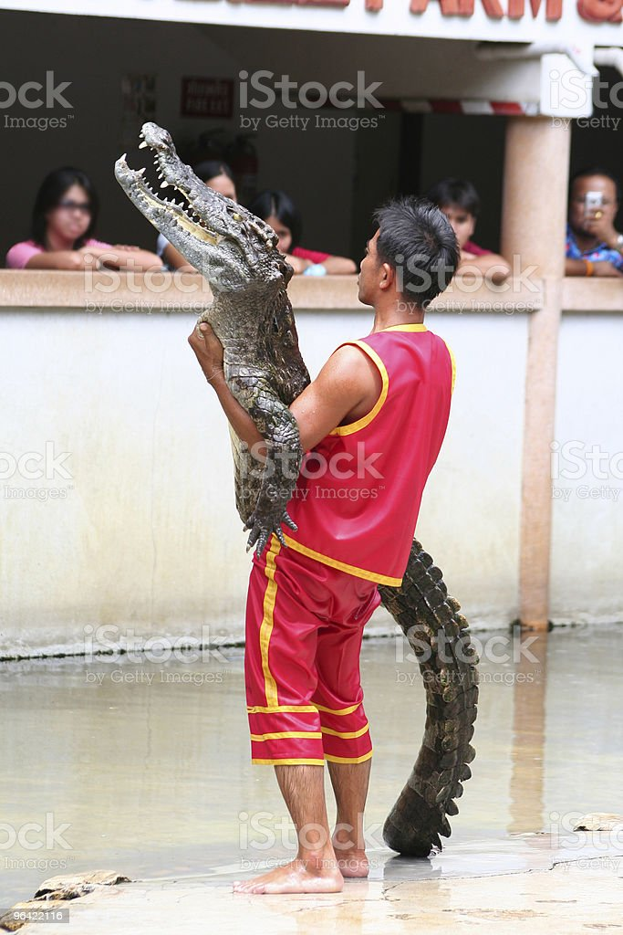 Man Holding Crocodile At Samutprakan Croc Farm and Zoo stock photo