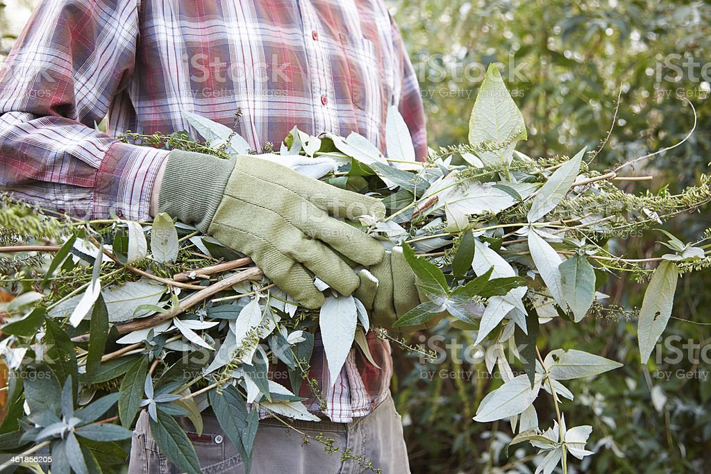 Man holding cut branches in garden stock photo