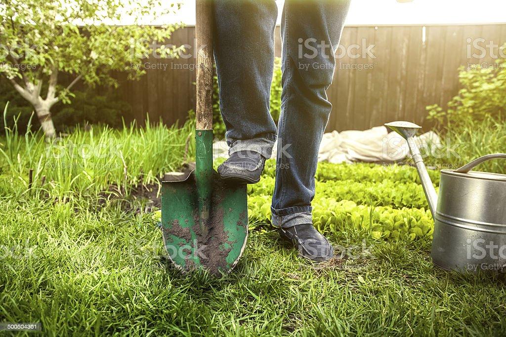 man holding foot on shovel at garden at sunny day stock photo