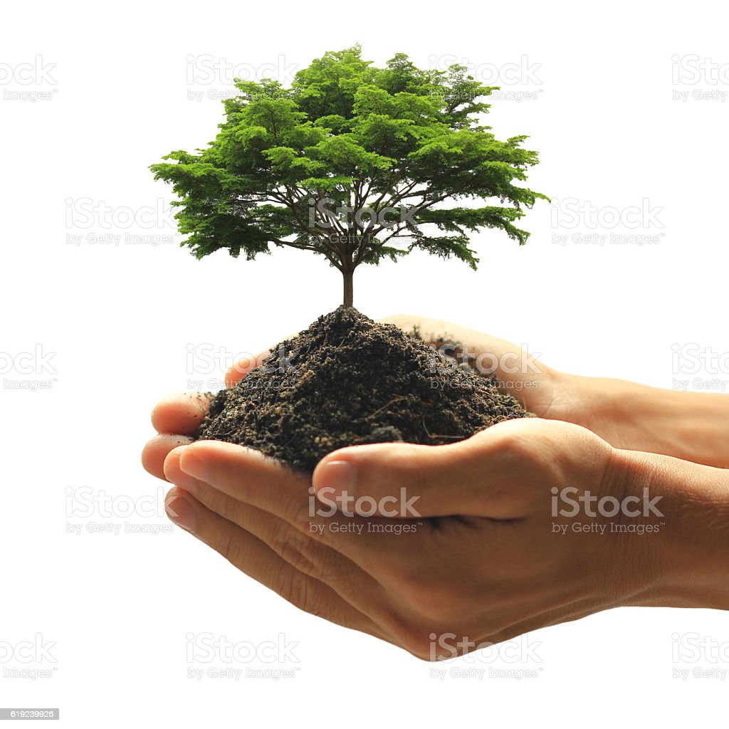 Man holding green plant in hand isolated on white stock photo