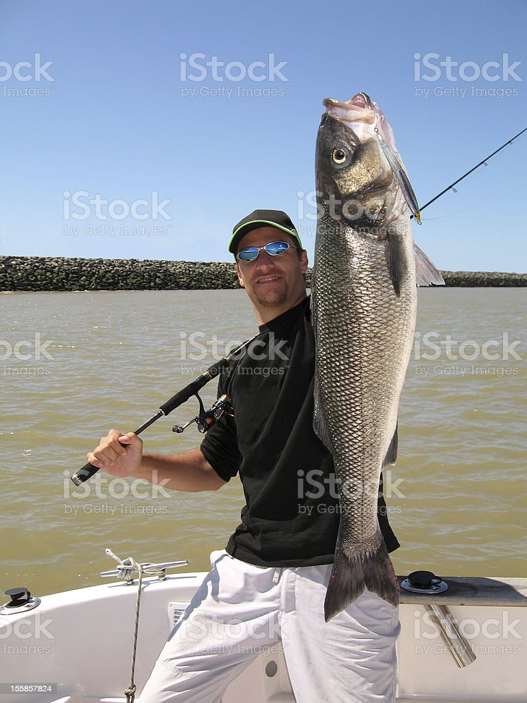 Man holding large sea bass catch stock photo