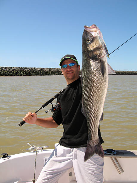 Man holding large sea bass catch stock photo