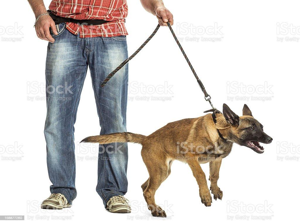 Man holding leash of aggressive Belgian Shepherd against white background royalty-free stock photo