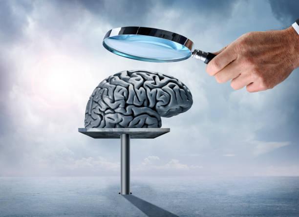 man håller förstoringsglas tittar noga på mänskliga hjärnan - brain magnifying bildbanksfoton och bilder