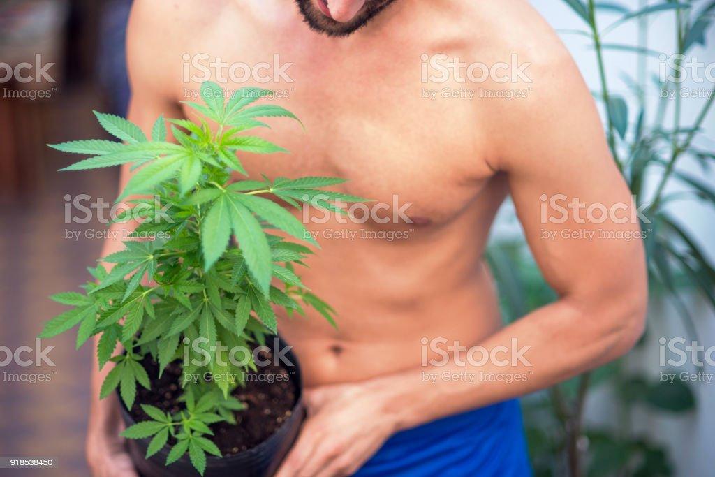 Man holding marijuana plant.