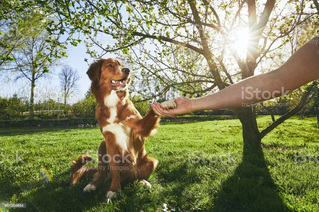 Man holding paw of the his dog stock photo