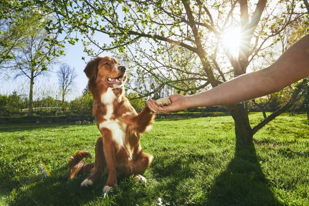 man holding paw of the his dog - pet owner stock pictures, royalty-free photos & images