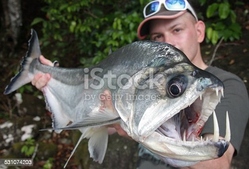 Man holding payara stock photo more pictures of catch of for Vampire fish for sale