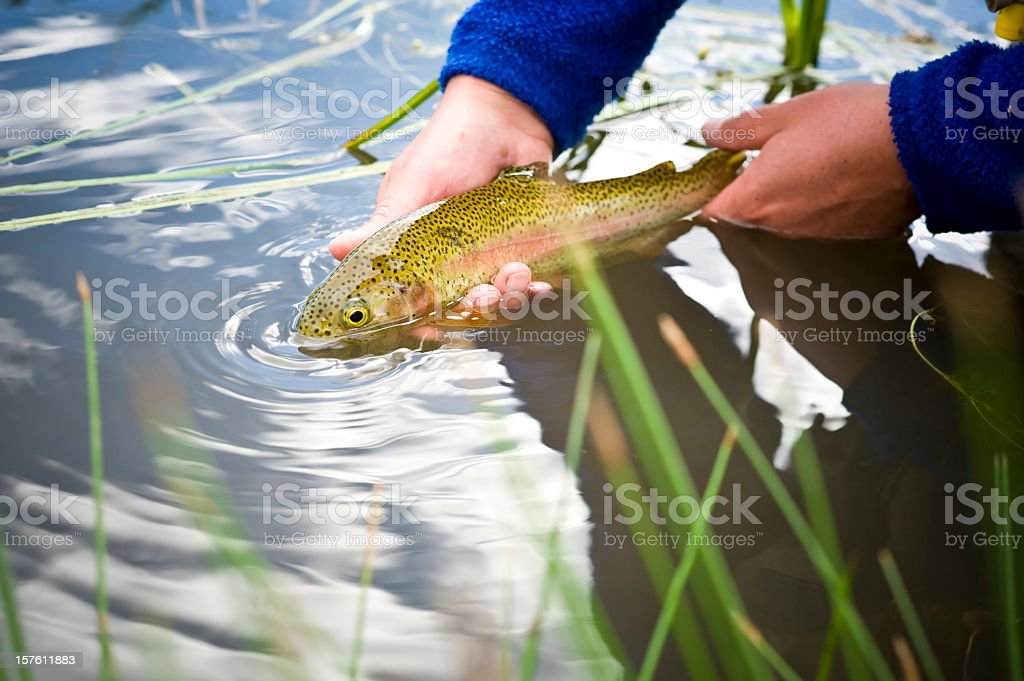 Man holding trout at the surface of a river stock photo