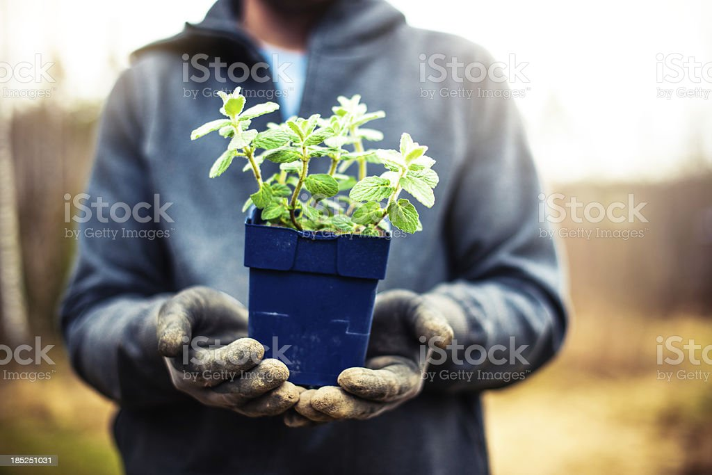 Man holding up some herbs stock photo