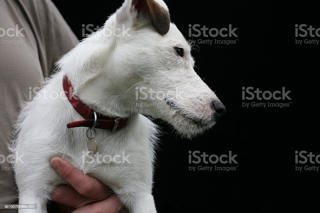 Man holding white dog, close-up foto stock royalty-free