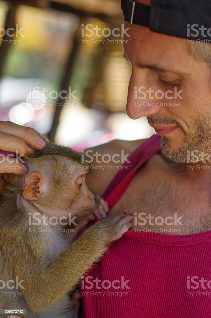 man holds a young Rhesus Macaque Macaca mulatta on the stock photo