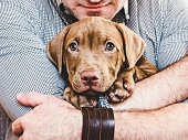 Man hugging a young, charming puppy. Close-up, white isolated background. Studio photo. Concept of care, education, training and raising of animals