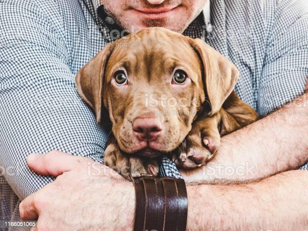 Man hugging a young charming puppy closeup picture id1166051065?b=1&k=6&m=1166051065&s=612x612&h=i lixirk0zqhrhtz jxo3uqnwcs1s6kraw5hnponrlm=